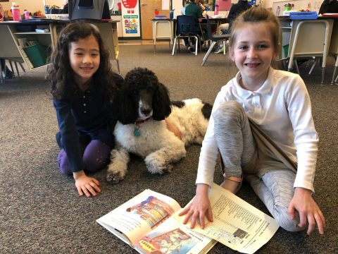 Chrissy is not only our classroom pet, but she's a certified service/therapy dog. She's always ready to play, snuggle, and protect her classroom friends. We love her!